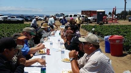 Luncheon by Naturipe | Breeding Program | Lassen Canyon Nursery