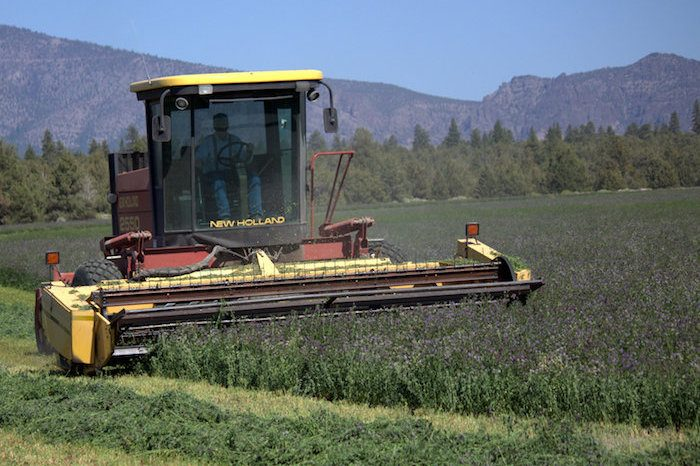 Hay Operations | Lassen Canyon Nursery