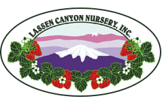 Lassen Canyon Nursery