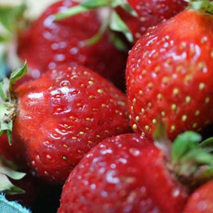 Hood | Strawberry Varieties | Lassen Canyon Nursery