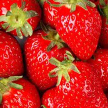 Merced | Strawberry Varieties | Lassen Canyon Nursery