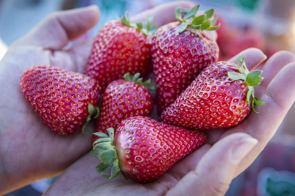 Cabrillo | Strawberry Varieties | Lassen Canyon Nursery